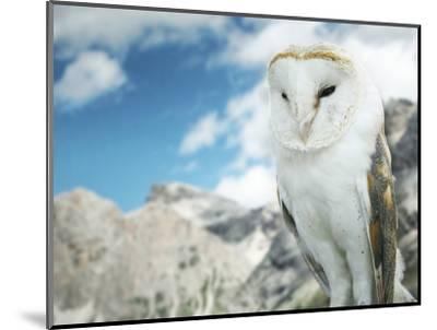 Beautiful Barn Owl in to the Wild Nature-Valentina Photos-Mounted Photographic Print