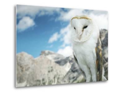 Beautiful Barn Owl in to the Wild Nature-Valentina Photos-Metal Print