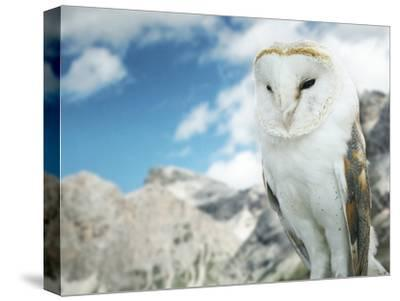 Beautiful Barn Owl in to the Wild Nature-Valentina Photos-Stretched Canvas Print