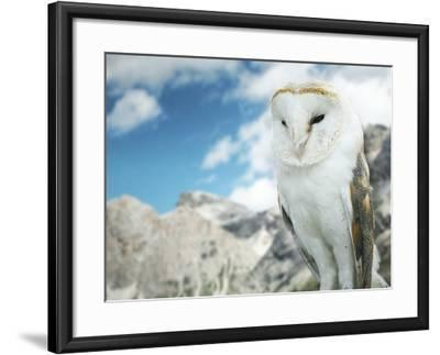 Beautiful Barn Owl in to the Wild Nature-Valentina Photos-Framed Photographic Print