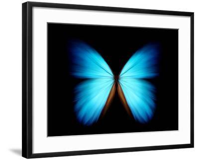 BLUE MORPHO- ethylalkohol-Framed Photographic Print