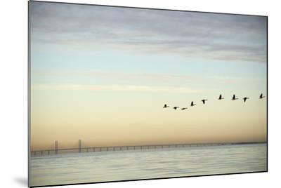 Flock of Birds Flying near Bridge- BMJ-Mounted Photographic Print