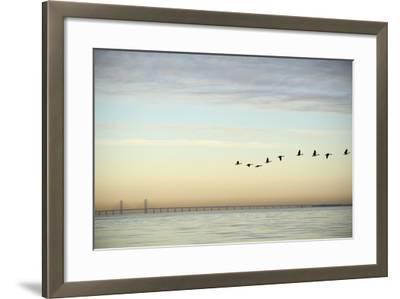 Flock of Birds Flying near Bridge- BMJ-Framed Photographic Print
