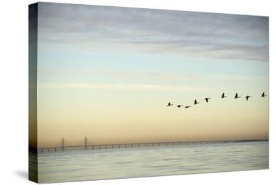Flock of Birds Flying near Bridge- BMJ-Stretched Canvas Print
