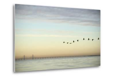 Flock of Birds Flying near Bridge- BMJ-Metal Print