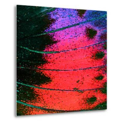 Butterfly Wing Texture, close up of Detail of Butterfly Wing for Background- wanchai-Metal Print