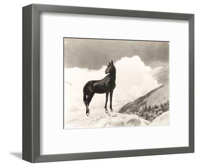 Wild Thing-Everett Collection-Framed Photographic Print