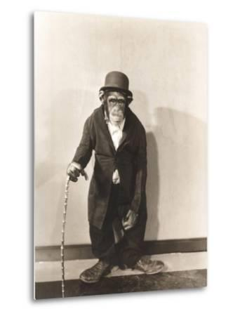 Monkey Dressed in Tight Overcoat and Bowler Hat-Everett Collection-Metal Print