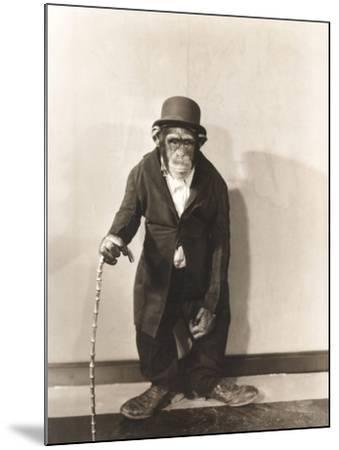 Monkey Dressed in Tight Overcoat and Bowler Hat-Everett Collection-Mounted Photographic Print