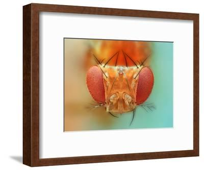 Macro, Insect, Spider, Bee, Stacking, Stack, Fly, Micro- vasekk-Framed Photographic Print