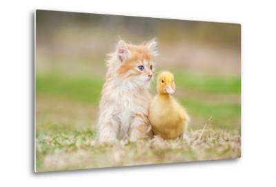 Adorable Red Kitten with Little Duckling-Grigorita Ko-Metal Print
