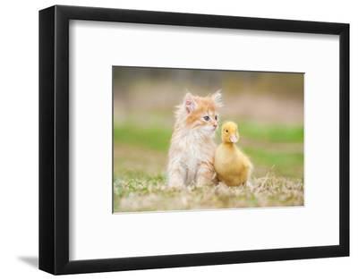 Adorable Red Kitten with Little Duckling-Grigorita Ko-Framed Photographic Print