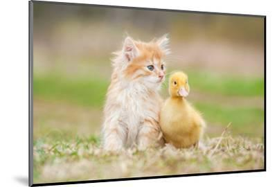 Adorable Red Kitten with Little Duckling-Grigorita Ko-Mounted Photographic Print