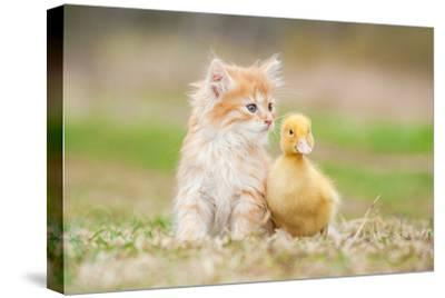 Adorable Red Kitten with Little Duckling-Grigorita Ko-Stretched Canvas Print