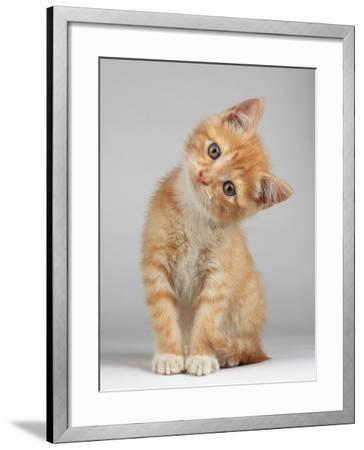Cute Little Kitten-Lana Langlois-Framed Photographic Print