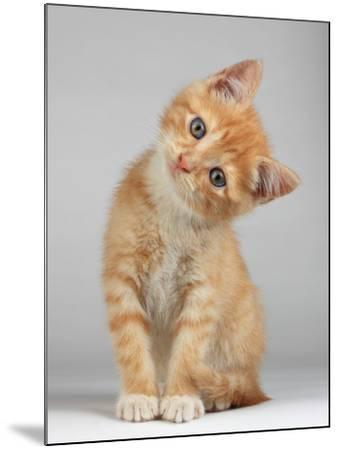 Cute Little Kitten-Lana Langlois-Mounted Photographic Print