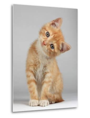 Cute Little Kitten-Lana Langlois-Metal Print