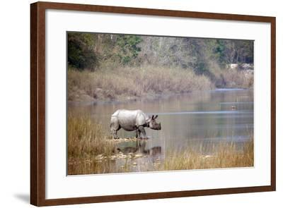 Greater One-Horned Rhinoceros Specie Rhinoceros Unicornis in Bardia, Nepal- Utopia_88-Framed Photographic Print