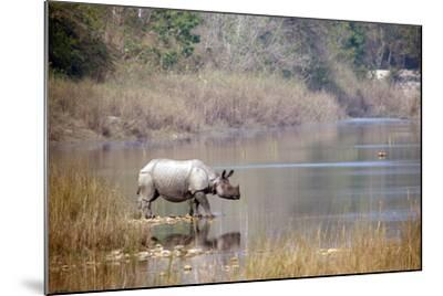 Greater One-Horned Rhinoceros Specie Rhinoceros Unicornis in Bardia, Nepal- Utopia_88-Mounted Photographic Print