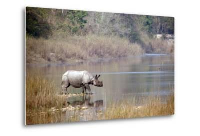 Greater One-Horned Rhinoceros Specie Rhinoceros Unicornis in Bardia, Nepal- Utopia_88-Metal Print