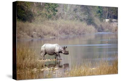 Greater One-Horned Rhinoceros Specie Rhinoceros Unicornis in Bardia, Nepal- Utopia_88-Stretched Canvas Print