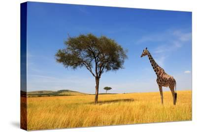 Beautiful Landscape with Tree and Giraffe in Africa-Volodymyr Burdiak-Stretched Canvas Print