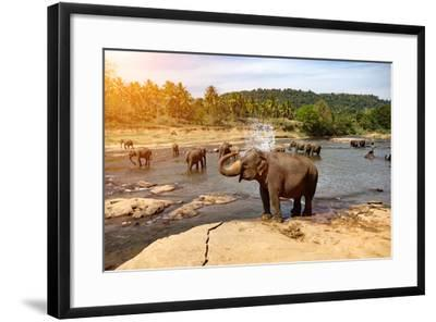 Elephants Bathing in the River. National Park. Pinnawala Elephant Orphanage. Sri Lanka.-Travel landscapes-Framed Photographic Print