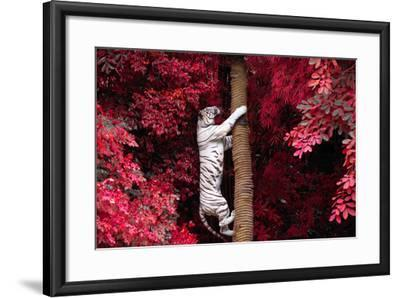 The White Tiger.- jeep2499-Framed Photographic Print
