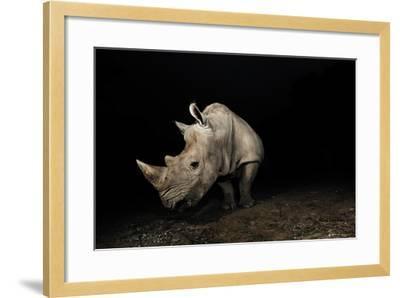White Rhinoceros-Signature Message-Framed Photographic Print