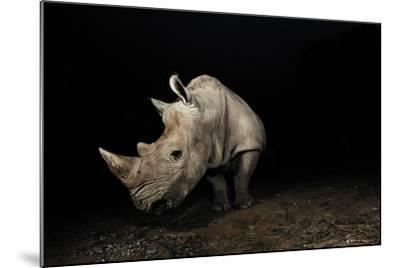 White Rhinoceros-Signature Message-Mounted Photographic Print