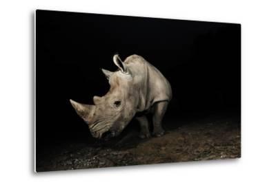 White Rhinoceros-Signature Message-Metal Print