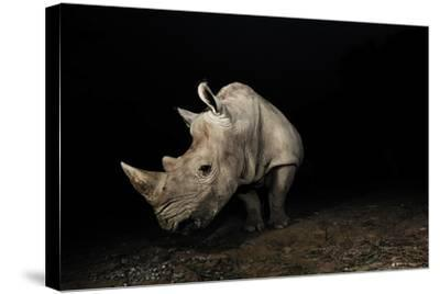 White Rhinoceros-Signature Message-Stretched Canvas Print