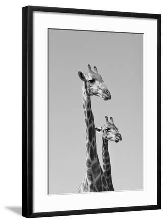 Giraffe - African Wildlife Background - Pair of Necks and Heads-Stacey Ann Alberts-Framed Photographic Print