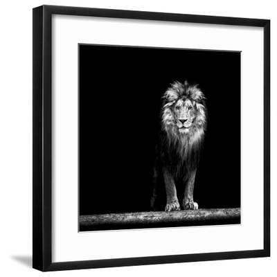 Portrait of a Beautiful Lion, in the Dark-Baranov E-Framed Photographic Print