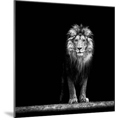 Portrait of a Beautiful Lion, in the Dark-Baranov E-Mounted Photographic Print
