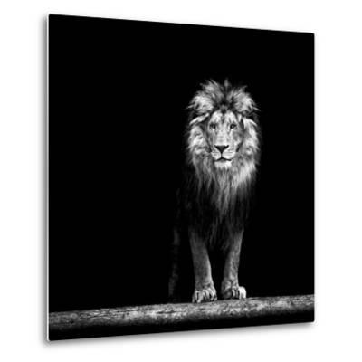 Portrait of a Beautiful Lion, in the Dark-Baranov E-Metal Print
