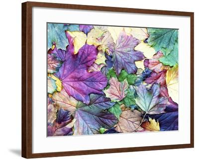 Special Colored Autumn Leaves- ninii-Framed Photographic Print