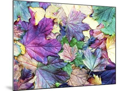 Special Colored Autumn Leaves- ninii-Mounted Photographic Print