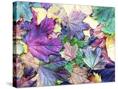 Special Colored Autumn Leaves- ninii-Stretched Canvas Print