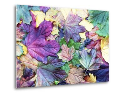 Special Colored Autumn Leaves- ninii-Metal Print