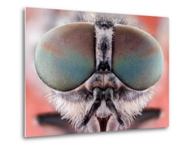 Fly Macro Insect Nature Animal Eye Bug close Small Wildlife Head Portrait Color Sharp-MURGVI-Metal Print