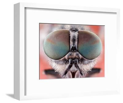 Fly Macro Insect Nature Animal Eye Bug close Small Wildlife Head Portrait Color Sharp-MURGVI-Framed Photographic Print