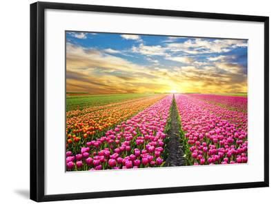 A Magical Landscape with Sunrise over Tulip Field in the Netherlands-Andrij Vatsyk-Framed Photographic Print