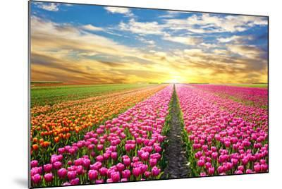 A Magical Landscape with Sunrise over Tulip Field in the Netherlands-Andrij Vatsyk-Mounted Photographic Print