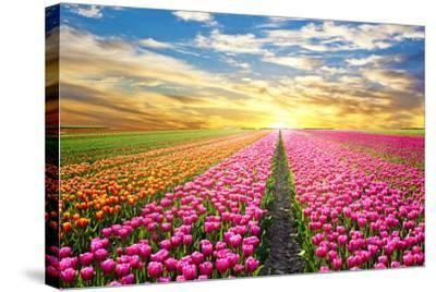 A Magical Landscape with Sunrise over Tulip Field in the Netherlands-Andrij Vatsyk-Stretched Canvas Print