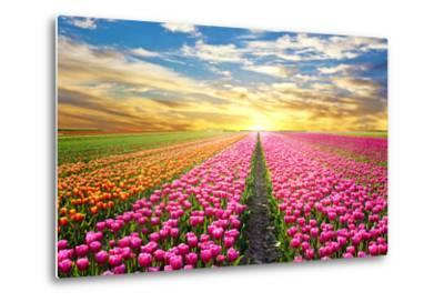 A Magical Landscape with Sunrise over Tulip Field in the Netherlands-Andrij Vatsyk-Metal Print