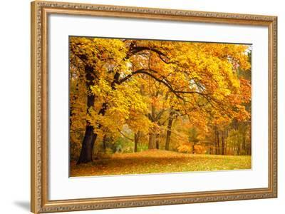 Collection of Beautiful Colorful Autumn Leaves / Green, Yellow, Orange, Red-Taiga-Framed Photographic Print