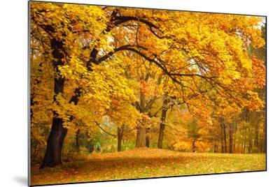 Collection of Beautiful Colorful Autumn Leaves / Green, Yellow, Orange, Red-Taiga-Mounted Photographic Print