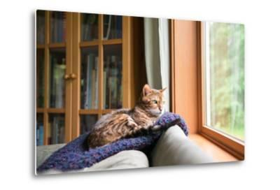 Bengal Mix Cat Relaxing on Indigo Blue Blanket by Large Window Looking Outside-Anna Hoychuk-Metal Print
