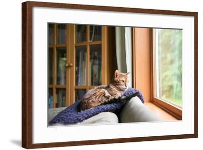 Bengal Mix Cat Relaxing on Indigo Blue Blanket by Large Window Looking Outside-Anna Hoychuk-Framed Photographic Print